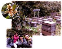 TBSテレビ「ハッピーエンド」幻の蜂蜜(びわハチミツ)でバレンタインチョコレート作り ロケ