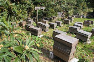 ビワの蜂蜜用巣箱